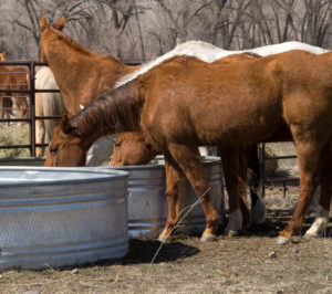 Keeping Your Horse Cool In the Summer
