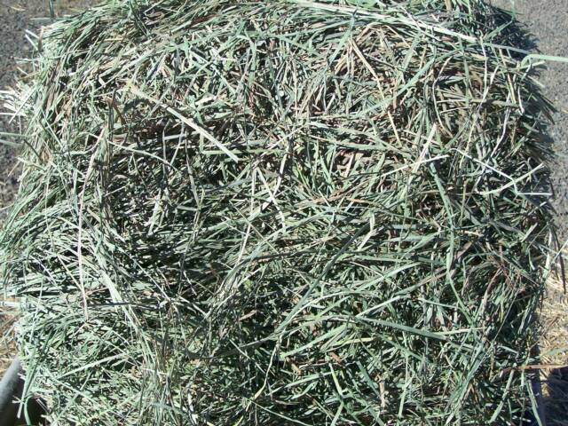 Timothy/Alfalfa Bales