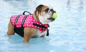 Protect Pets from Summer Heat