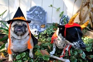 A Guide to Pet Halloween Safety
