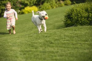Summer Pet Care: Canine Enrichment