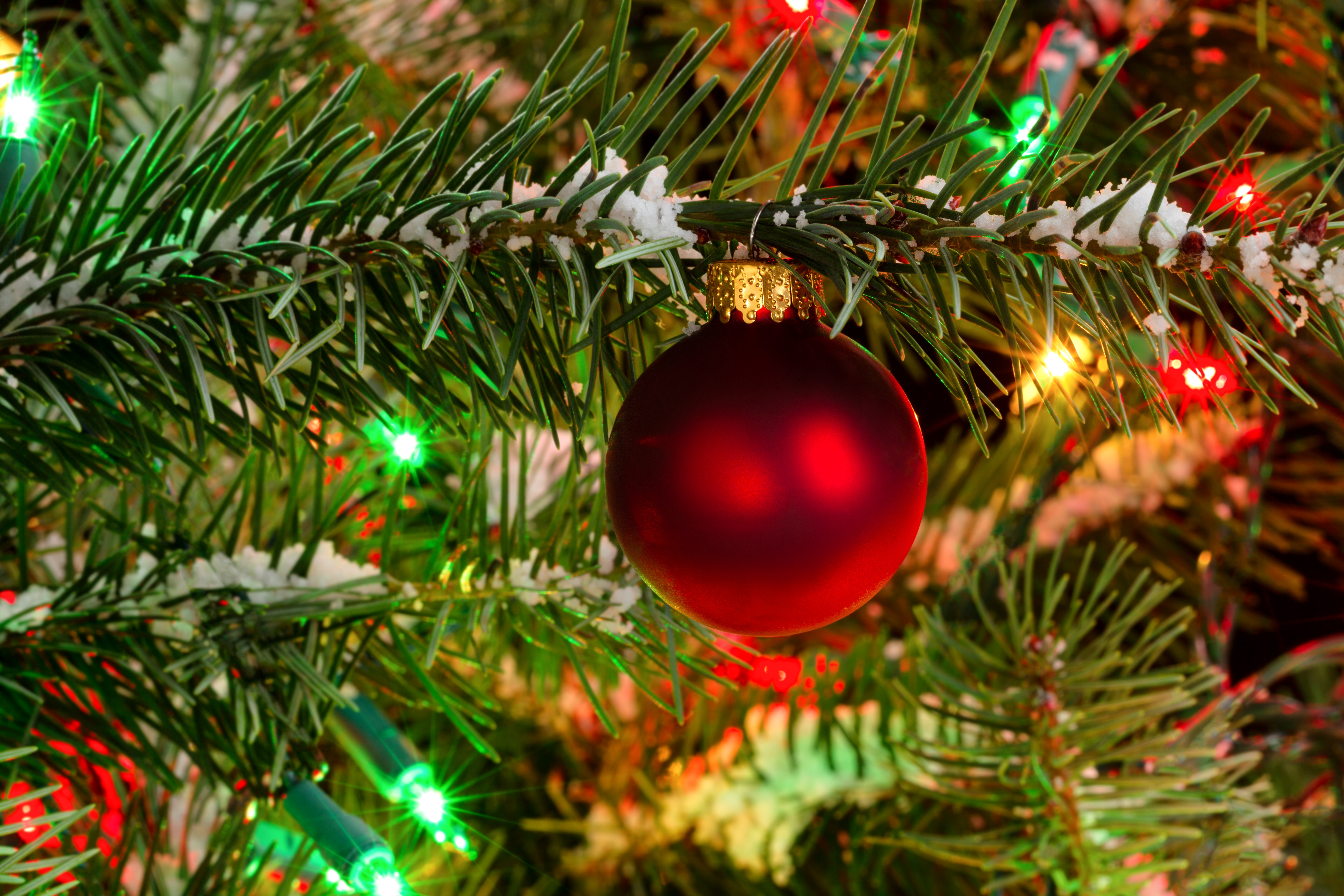 5 Tips For Caring For Your Fresh Cut Christmas Tree