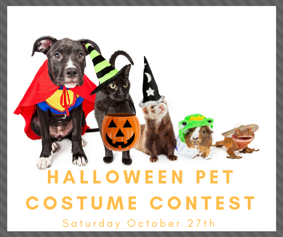 Halloween Costume Contest 2020 Near Me Dog Halloween Pet Costume Contest :: Kissimmee Valley Feed