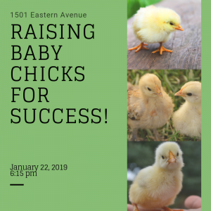 Chick Workshop