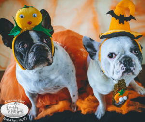 Pet Costume Contest and Fundraiser